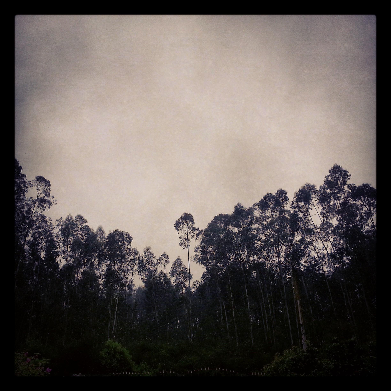 Chove , Chove